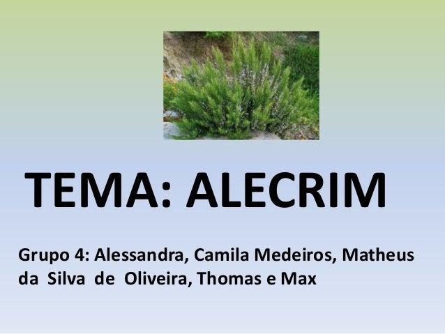 TEMA: ALECRIM Grupo 4: Alessandra, Camila Medeiros, Matheus da Silva de Oliveira, Thomas e Max