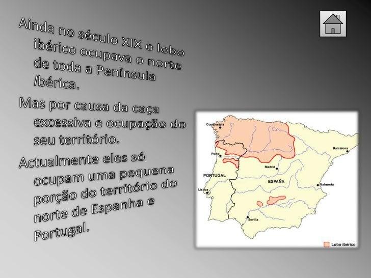 Os indivíduos de uma alcateia  são uma área vital em  tamanho de acordo com as  características da região. Em  Portugal, a...