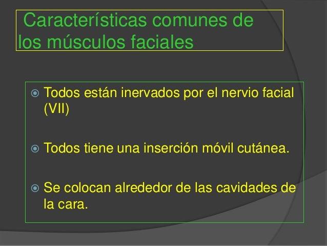 Grupo musculos faciales