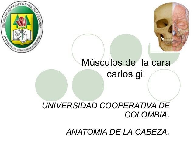 Músculos de la cara            carlos gilUNIVERSIDAD COOPERATIVA DE                COLOMBIA.    ANATOMIA DE LA CABEZA.