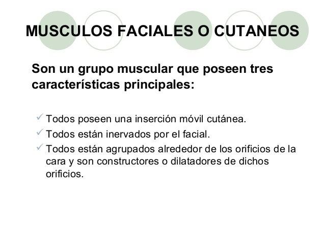 Grupo musculos faciales  Slide 2