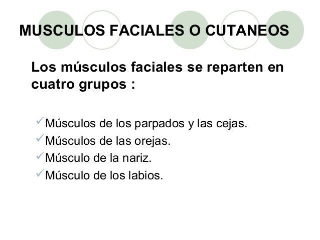 Grupo musculos faciales  Slide 3