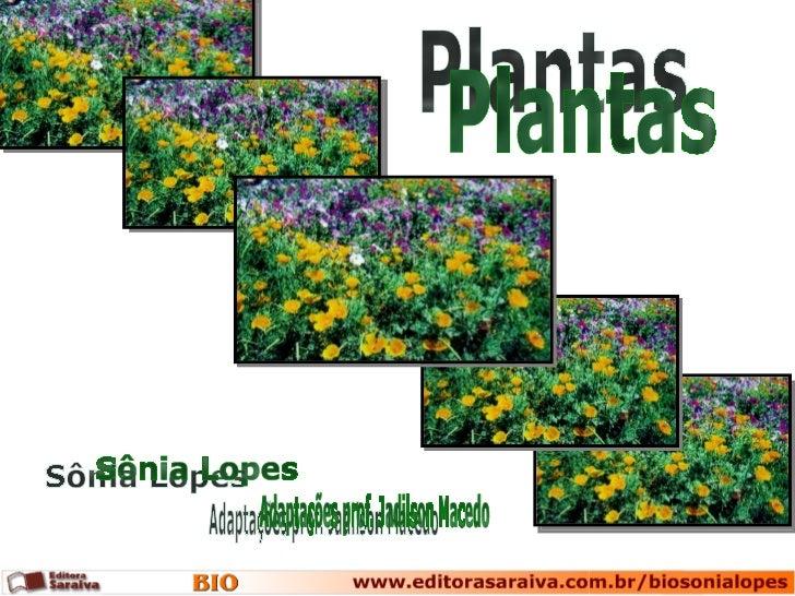 Plantas Sônia Lopes Adaptações prof. Jadilson Macedo