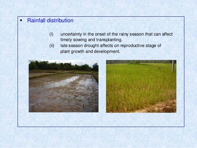  Rainfall distribution(i) uncertainty in the onset of the rainy season that can affecttimely sowing and transplanting.(ii...