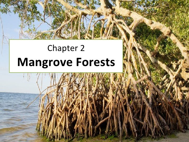 Chapter 2 Mangrove Forests