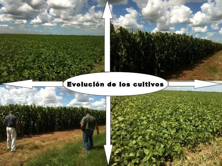 Evolución de los cultivos