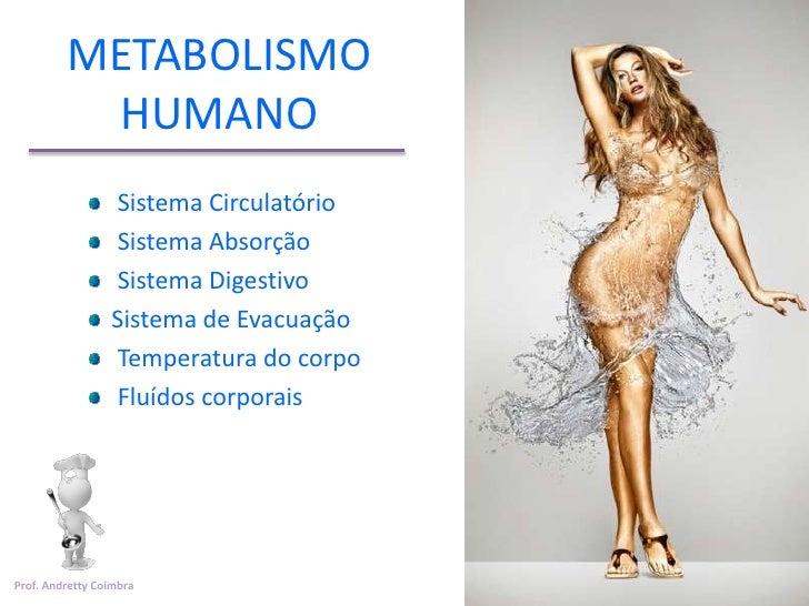 METABOLISMO          HUMANO                 Sistema Circulatório                 Sistema Absorção                 Sistema ...