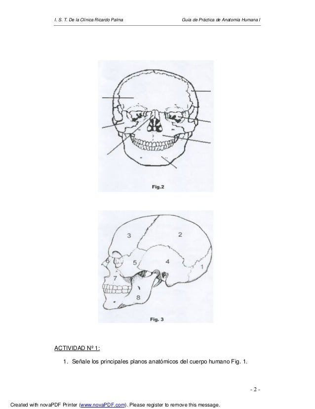 Guía anatomía-humana