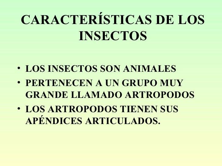 gu a taxon mica de insectos