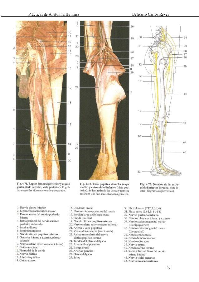 Guía de anatomía humana