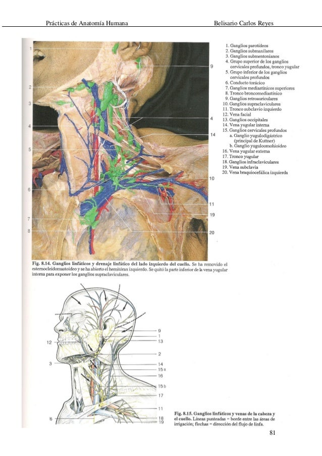 Perfecto Anatomía Humana Lado Izquierdo Bandera - Imágenes de ...