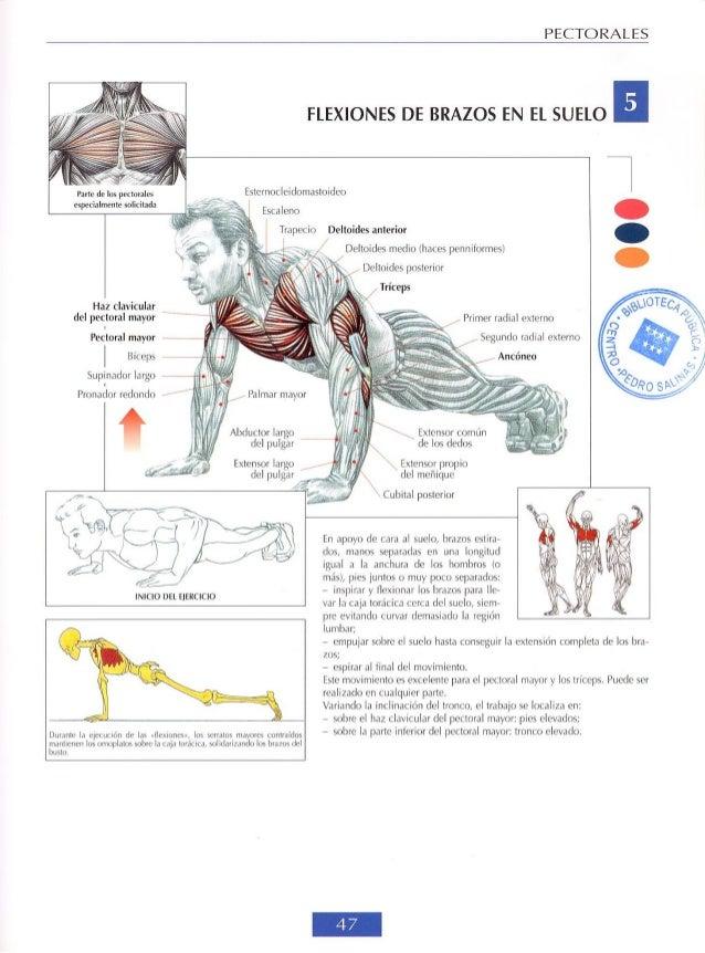 Guía de los movimientos de musculación Hombres
