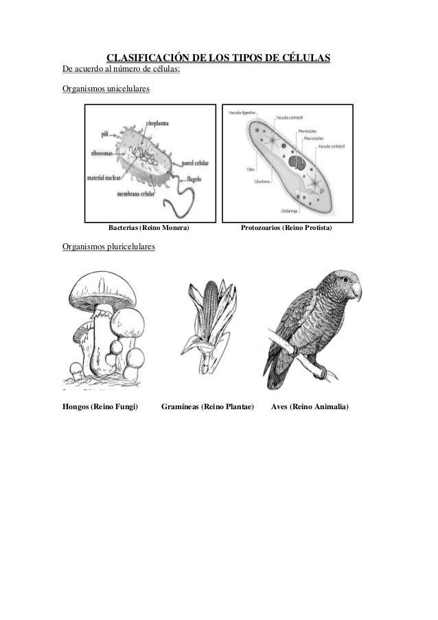 Guia De Trabajos Practicos De Biologia