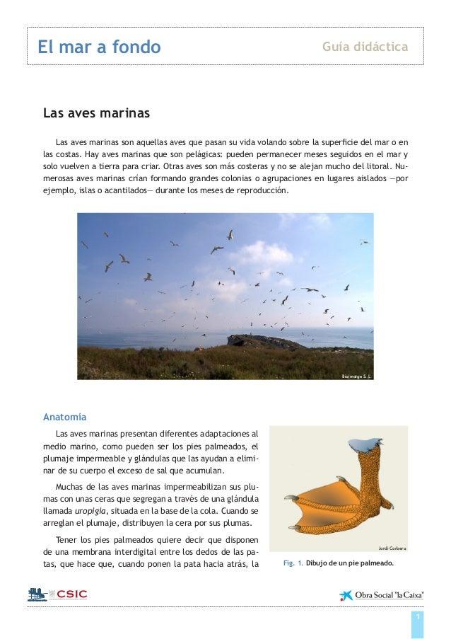 Guía didáctica aves marinas