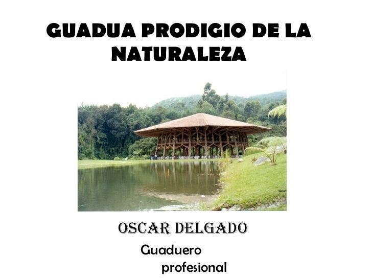 GUADUA PRODIGIO DE LA NATURALEZA Oscar delgado Guaduero  profesional