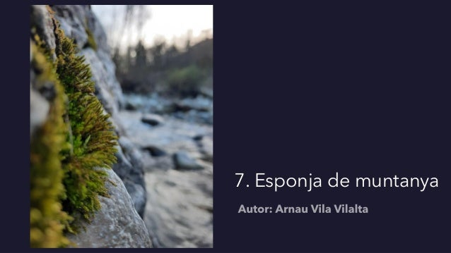 7. Esponja de muntanya