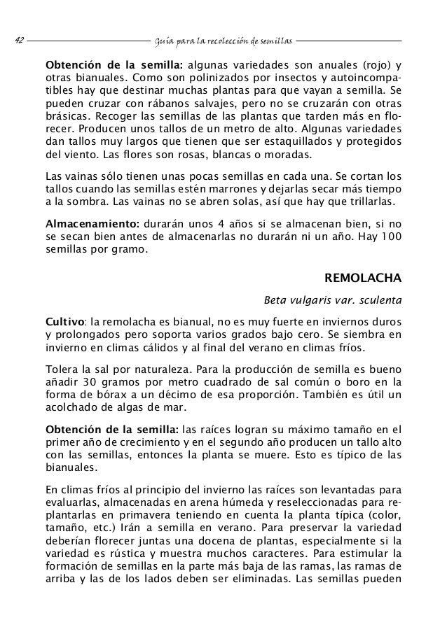 Semillas de Remolacha Forrajera Roja WAM Caja 250 gr. Beta vulgaris