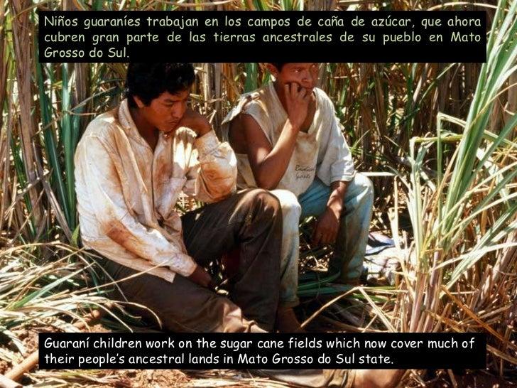 Guaranís Despair. Guaraníes Desesperación(Brasil)