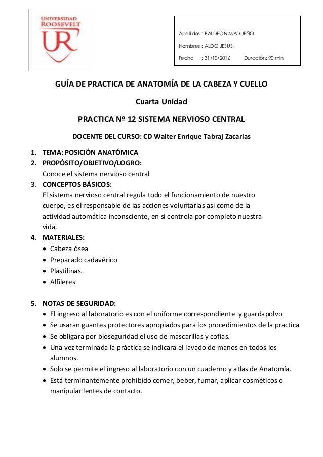 Guías de practica nº 12 sistema nervioso central