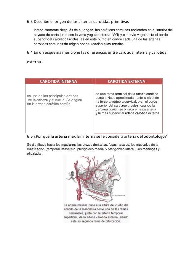 Guías de practica nº 15 angiologia