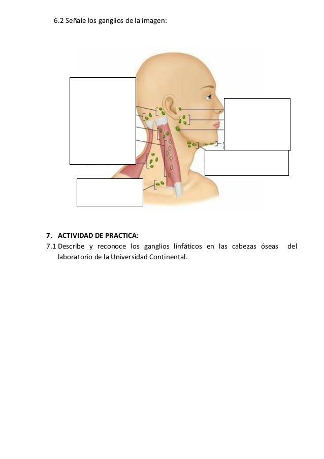 Encantador Ganglios Linfáticos Gráfico Festooning - Anatomía de Las ...
