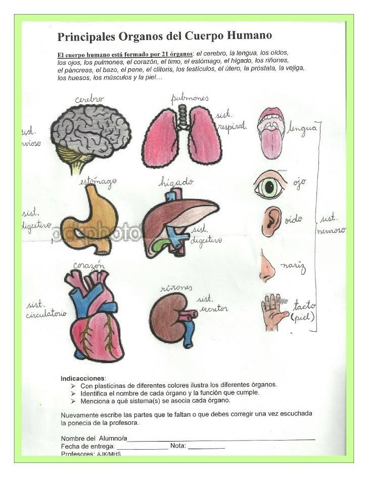 Guía sistemas del cuerpo humano