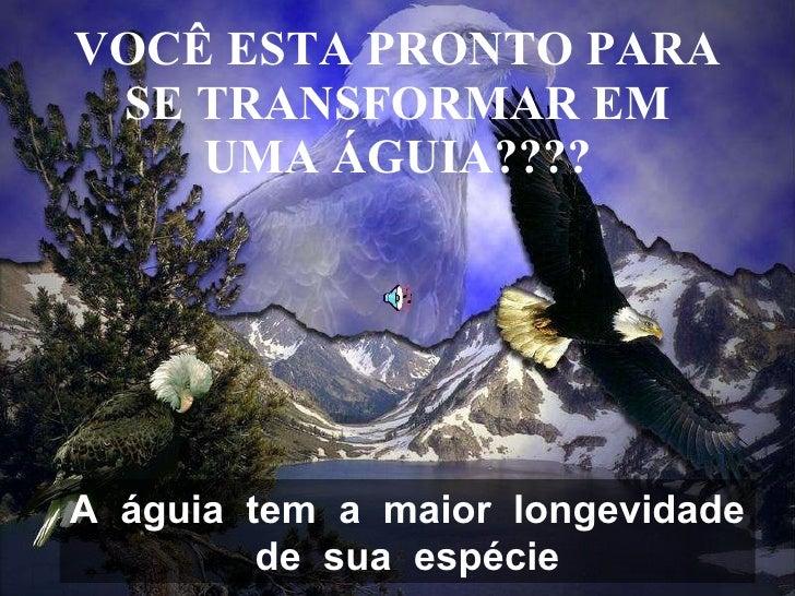 VOCÊ ESTA PRONTO PARA SE TRANSFORMAR EM UMA ÁGUIA???? A  águia  tem  a  maior  longevidade de  sua  espécie
