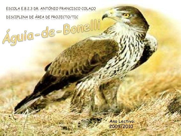Escola E.B.2,3 Dr. António Francisco ColaçoDisciplina de Área de Projecto/TIC<br />Águia-de-Bonelli<br />Ano Lectivo:<br /...