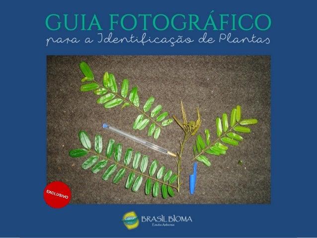 • A Brasil Bioma é uma empresa que oferece cursos de extensão em botânica e meio ambiente desde 2008, quando foi pioneira....