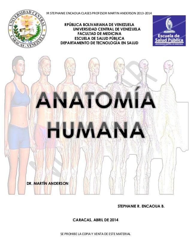 Guia anatomia 2013 2014 stephanie encaoua