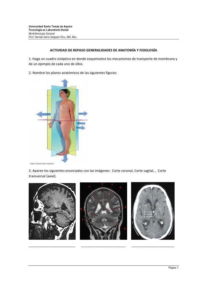 Hermosa Anatomía Y Fisiología Laboratorios Virtuales Ideas ...