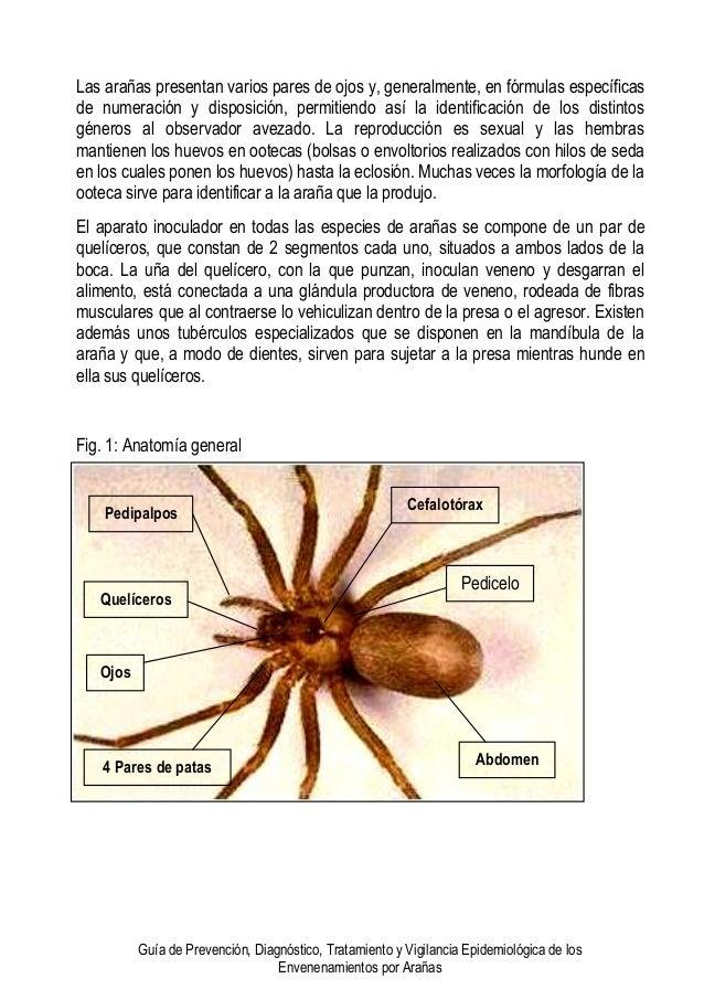 Guia de arañas