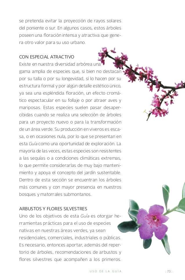 Guia de arboles Nuevo León