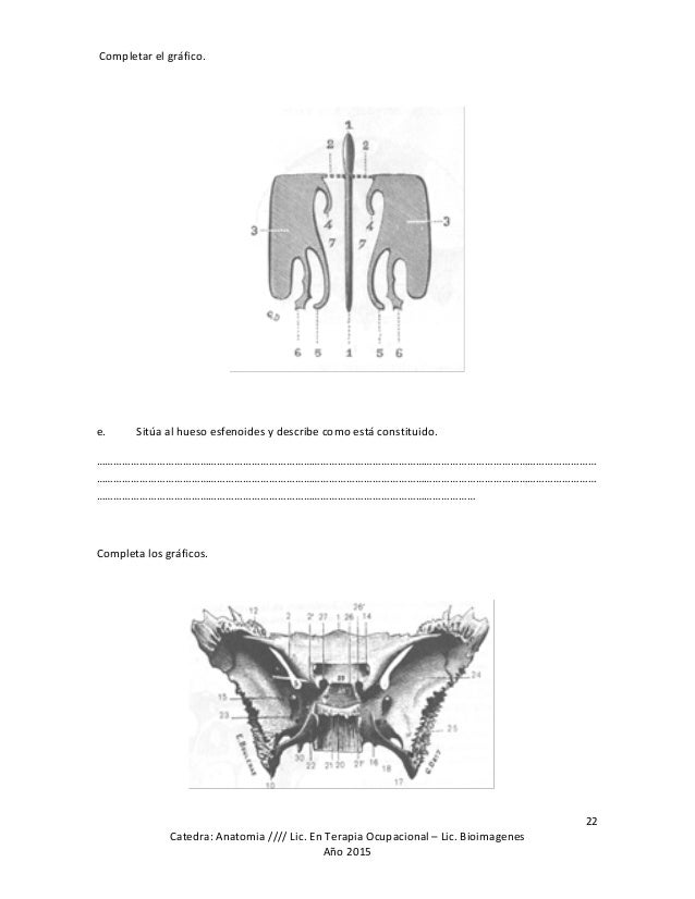 Perfecto Anatomía Guía De Estudio Composición - Anatomía de Las ...