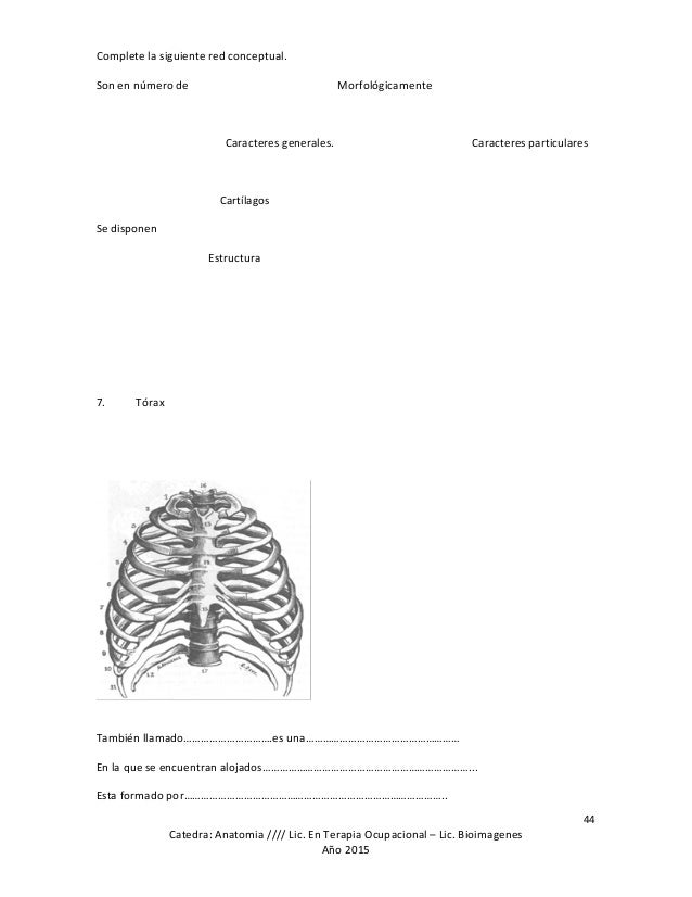 Guia de estudio de anatomia topografica de la carrera de terapia oc…