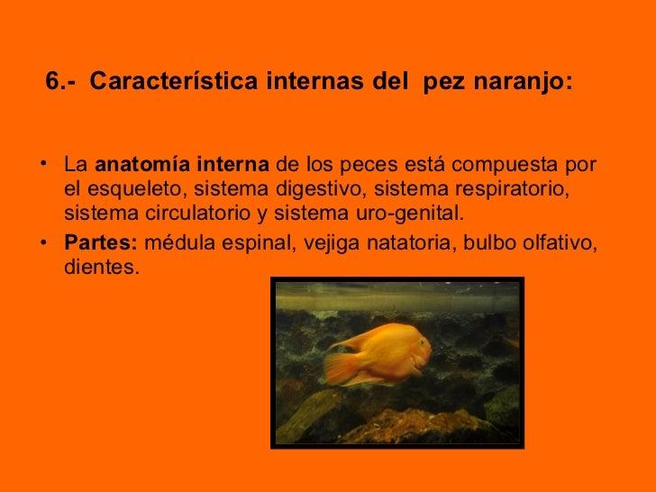 Lujoso Anatomía De Una Naranja Colección - Anatomía de Las ...