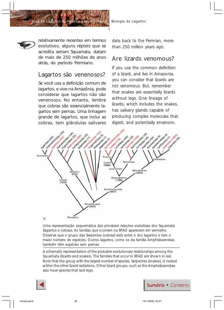 Guia de lagartos da reserva ducke biology of lizards guide to fandeluxe Images
