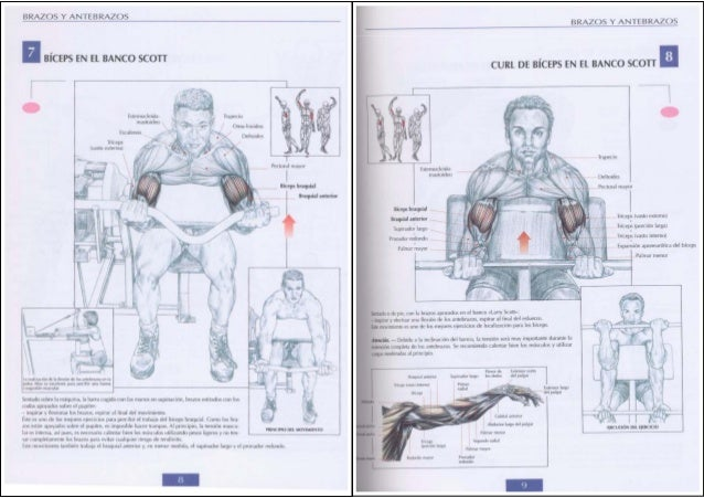 guia de escort músculo