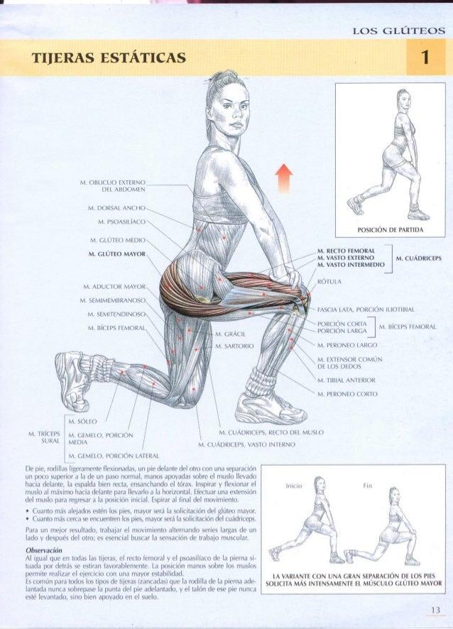 Guia de los movimientos de musculaciodesn descripcion anatmica mujeres