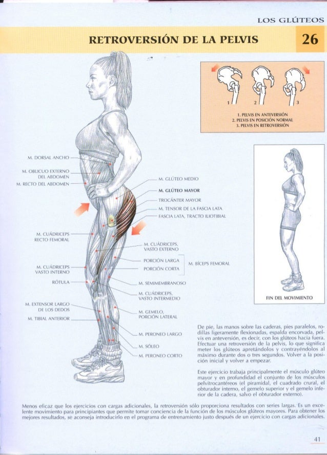Vistoso Anatomía Femenina Parte Inferior Del Abdomen Cresta ...