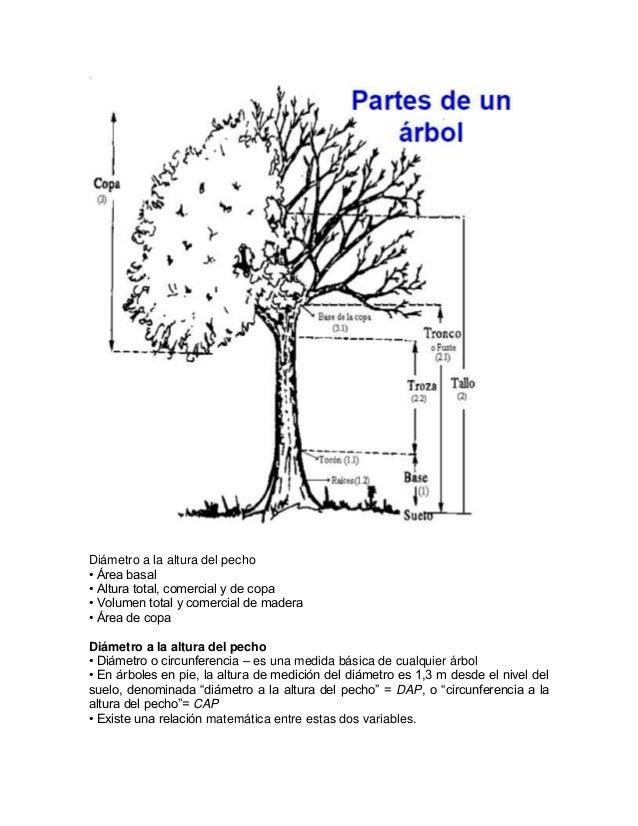 Guia de mediciones for Cuanto mide un arbol
