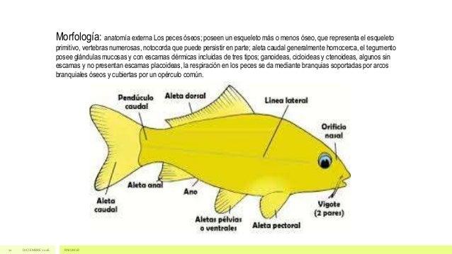 Guia de peces de la Reserva Natural de Uso Integral y Mixta Laguna de…
