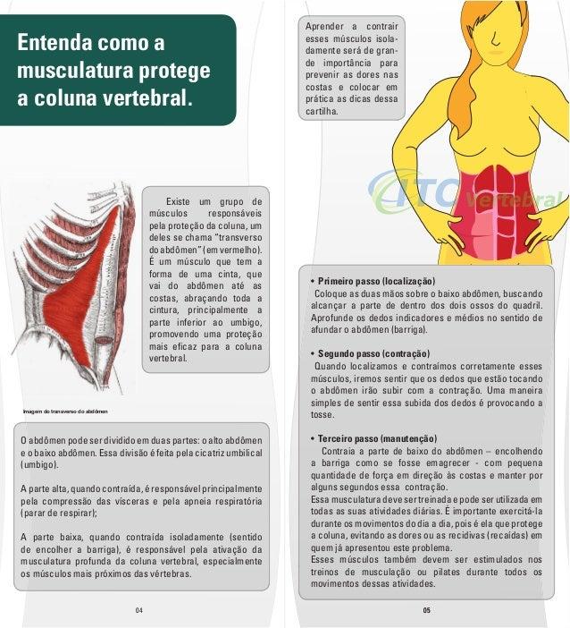 Entenda como a  musculatura protege  a coluna vertebral.  O abdômen pode ser dividido em duas partes: o alto abdômen  e o ...