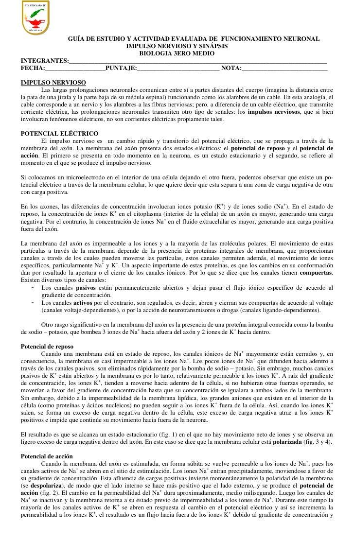 GUÍA DE ESTUDIO Y ACTIVIDAD EVALUADA DE FUNCIONAMIENTO NEURONAL                              IMPULSO NERVIOSO Y SINÁPSIS  ...