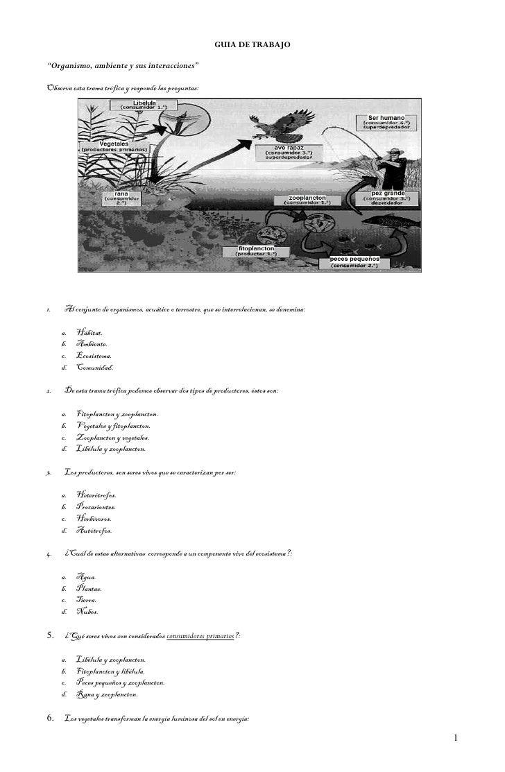"""GUIA DE TRABAJO  """"Organismo, ambiente y sus interacciones""""  Observa esta trama trófica y responde las preguntas:     1.   ..."""