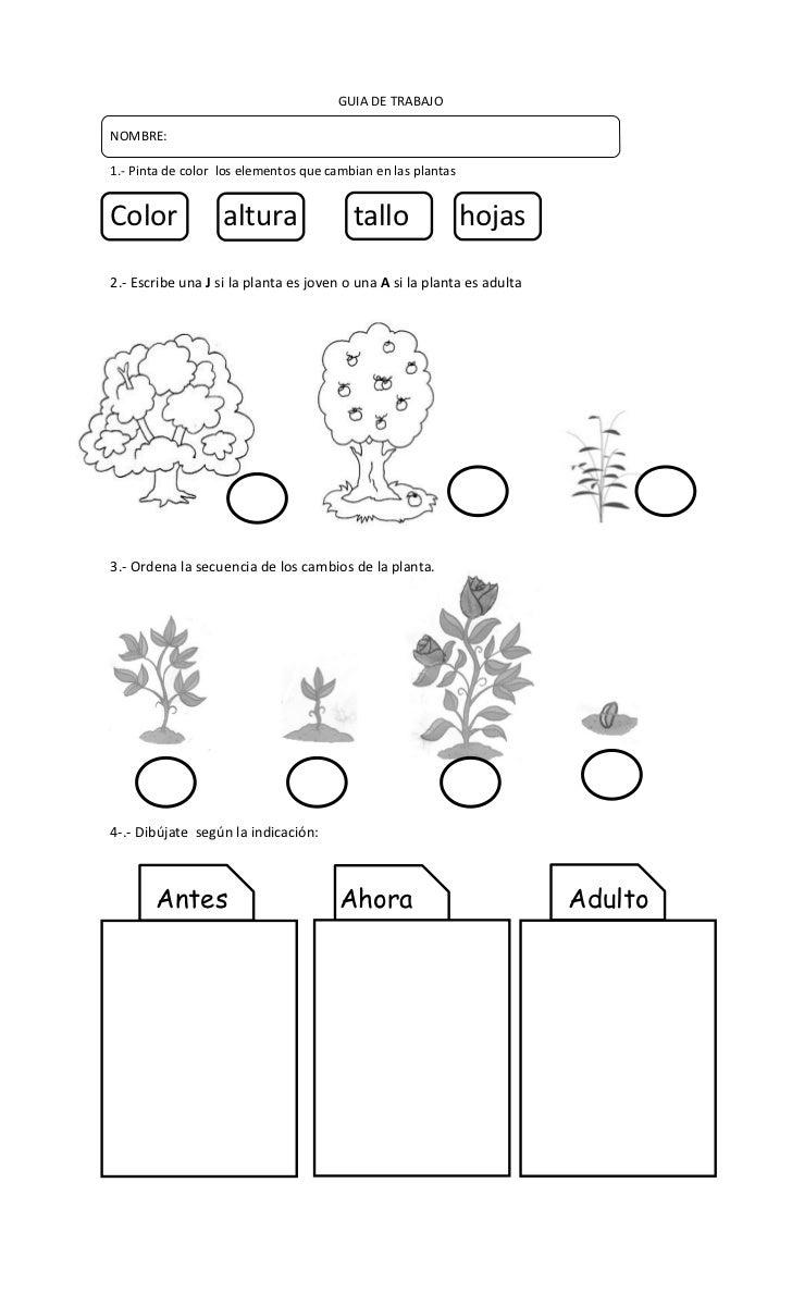 GUIA DE TRABAJONOMBRE:1.- Pinta de color los elementos que cambian en las plantasColor              altura                ...