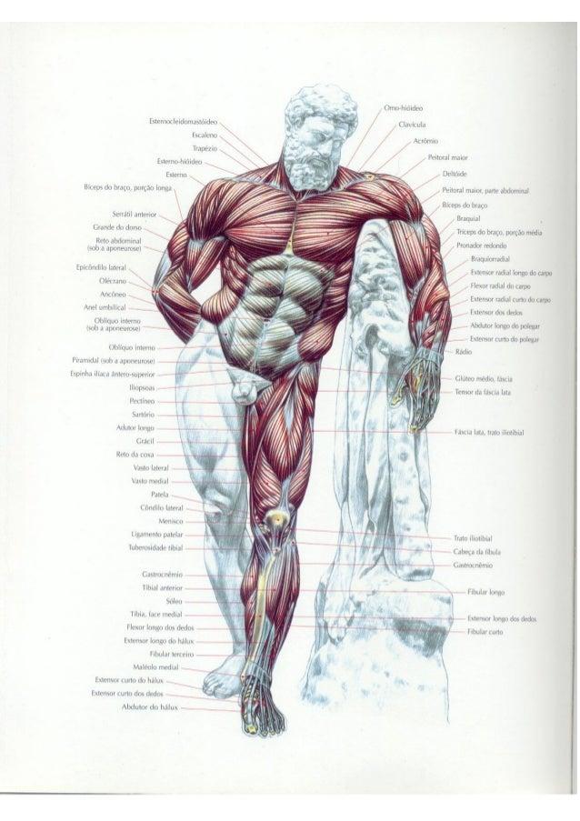 Movimentos guia (pdf) dos para musculacao de