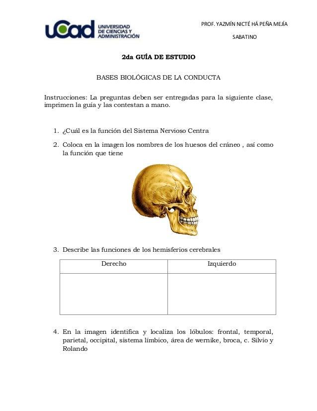 PROF. YAZMÍN NICTÉ HÁ PEÑA MEJÍA SABATINO 2da GUÍA DE ESTUDIO BASES BIOLÓGICAS DE LA CONDUCTA Instrucciones: La preguntas ...
