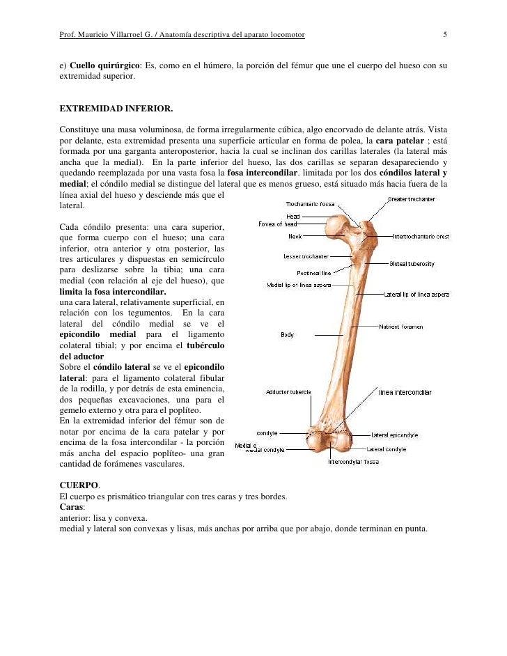 Asombroso Imágenes Anatomía De Las Extremidades Superiores Ornamento ...
