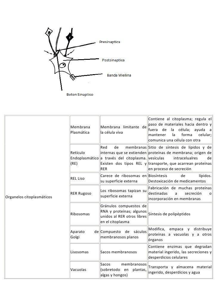 Guia fisiologia I